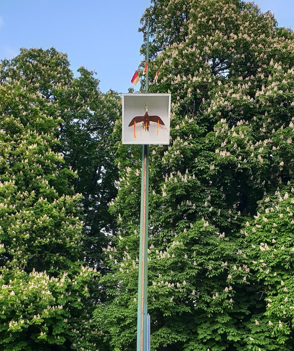 2019 05 17 Kaiservogel